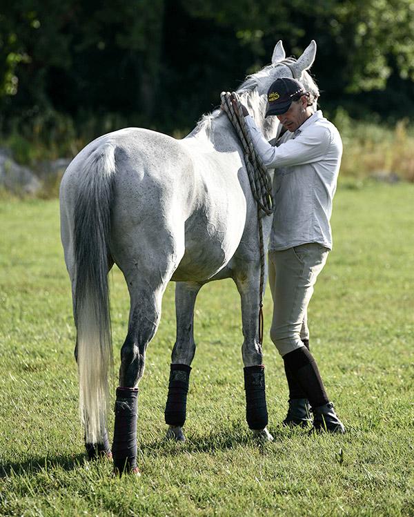 Renaud Subra éthologie équestre éthologie comportementalisme chevaux