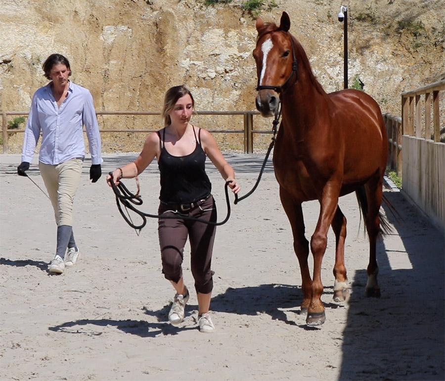 Renaud SUBRA éthologue chevaux Gironde