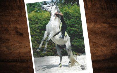 «Peur du cheval, mieux les comprendre pour mieux les gérer» – Cheval Pratique