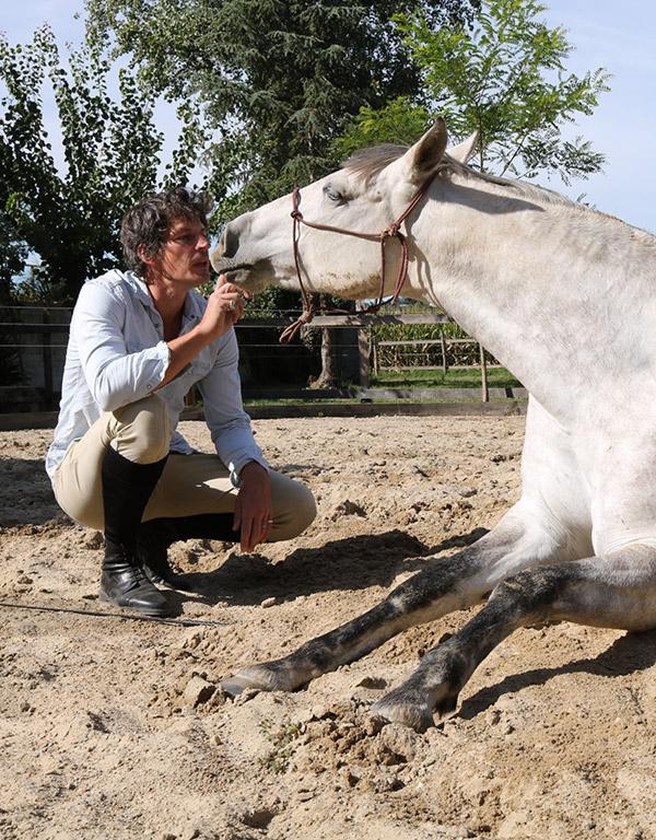 Renaud Subra Éthologue Comportementaliste chevaux