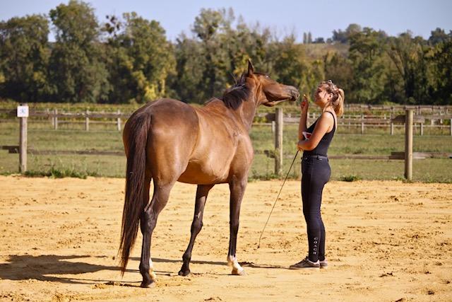 Charlotte_Cours_Ethologie_equestre_à_pied